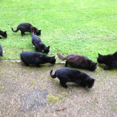 cats-in-wicklow